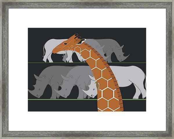 Giraffe And Rhinos Framed Print