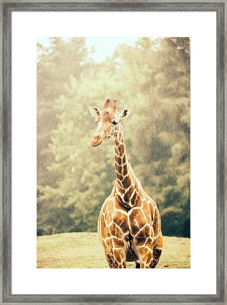 Giraffe In The Rain Framed Print