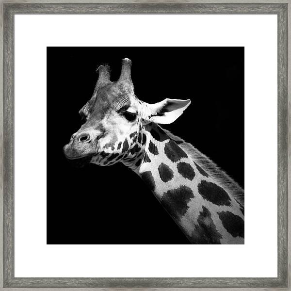 Portrait Of Giraffe In Black And White Framed Print