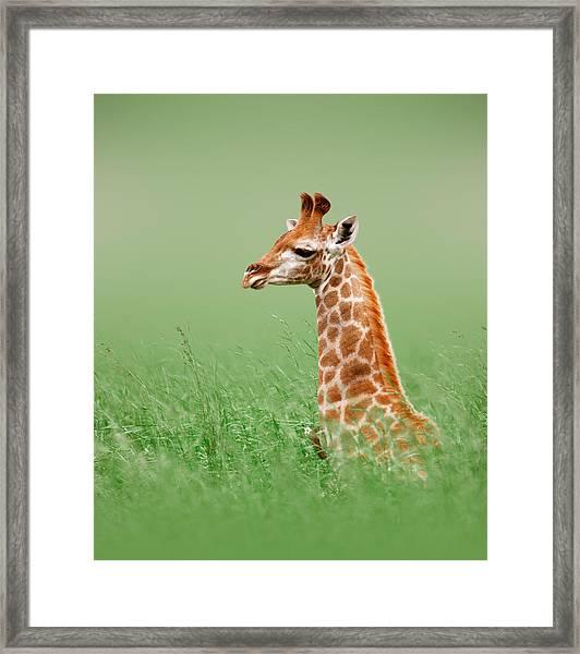 Giraffe Lying In Grass Framed Print
