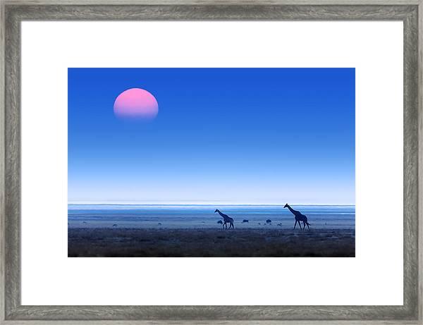 Giraffes On Salt Pans Of Etosha Framed Print