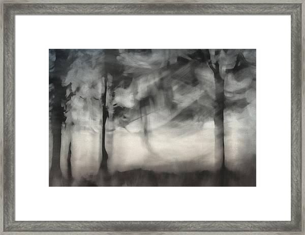 Glimpse Of Coastal Pines Framed Print