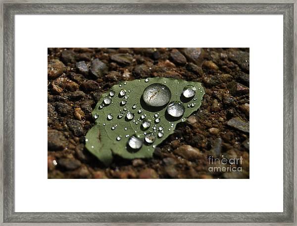 Glistening Raindrops Framed Print