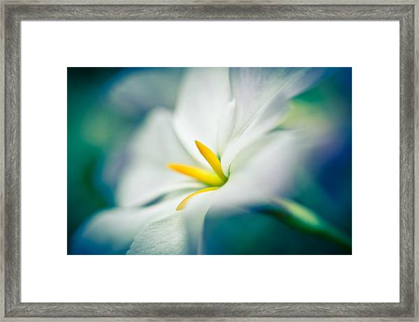 Framed Print featuring the photograph Glory Of The Sun by Priya Ghose