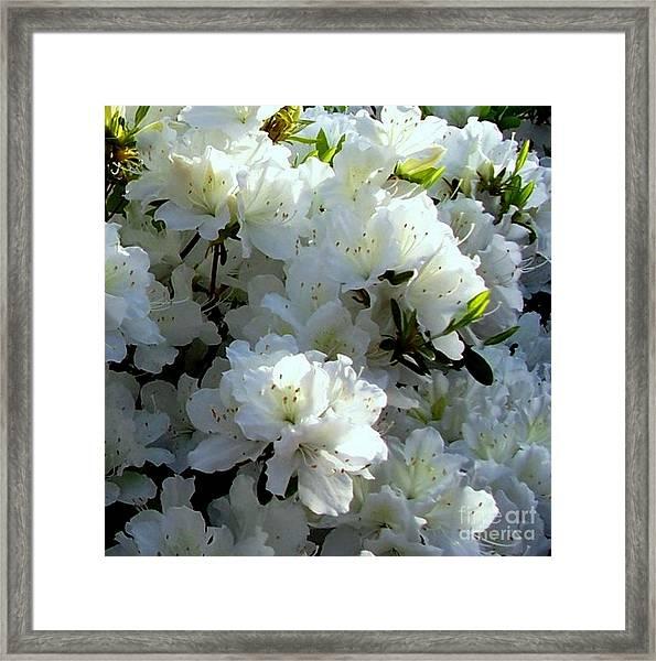 Glory Of White Framed Print
