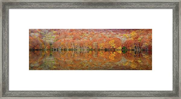 Glowing Autumn Framed Print