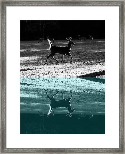 Glowing Buck Reflection Framed Print