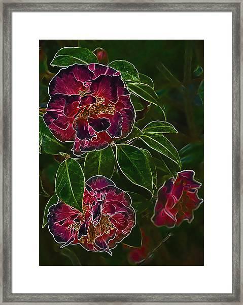 Glowing Camellia Framed Print