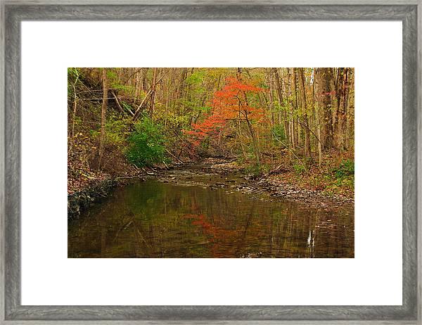 Glowing Fall Framed Print