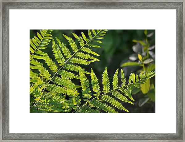 Glowing Fern Framed Print