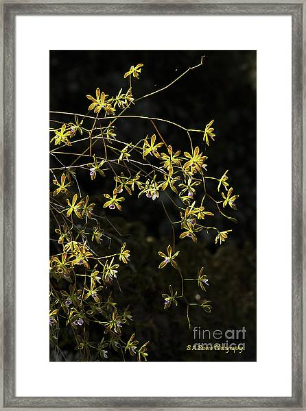 Glowing Orchids Framed Print