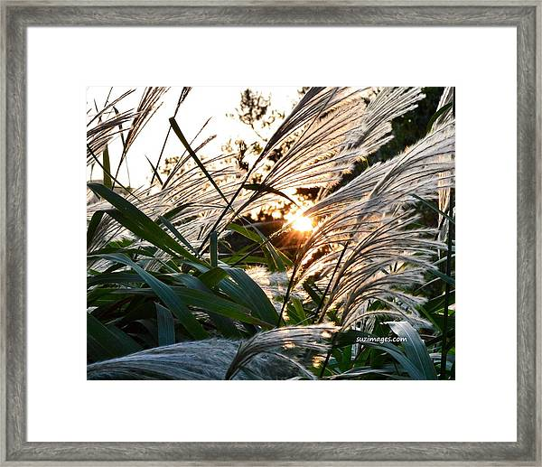 Glowing Pampas Framed Print