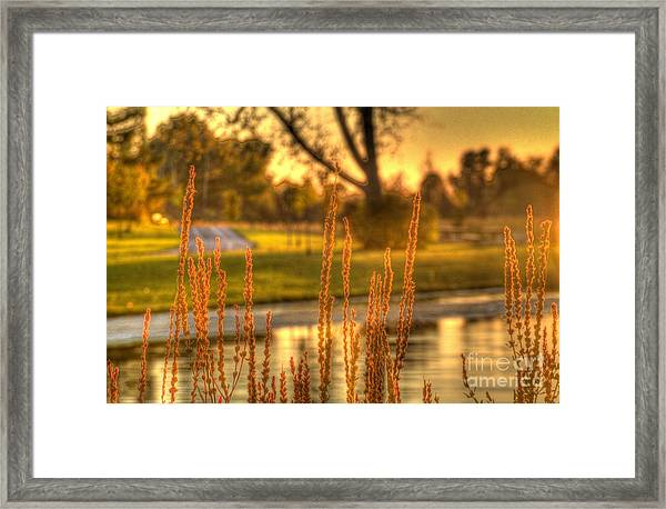 Glowing Plants In A Pond Framed Print