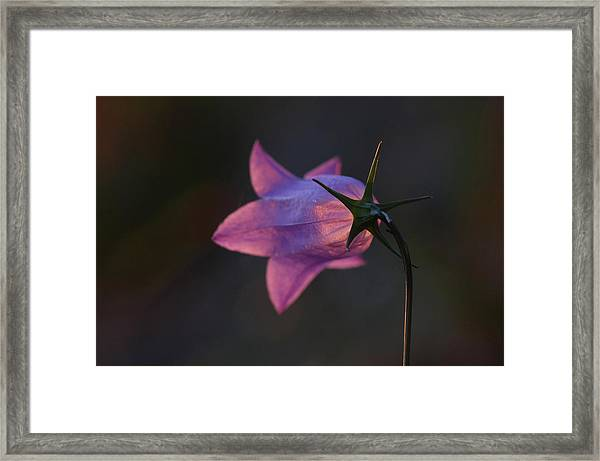 Glowing Sunset Flower Framed Print