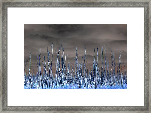 Glowing Trees 1 Framed Print