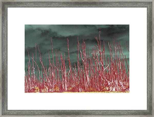 Glowing Trees 2 Framed Print