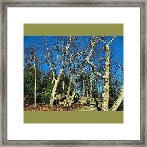Glowing Trees On The Mountain Framed Print