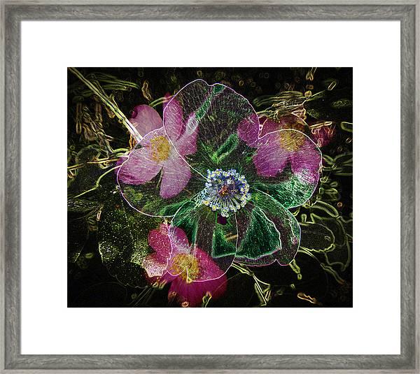 Glowing Wild Rose Framed Print