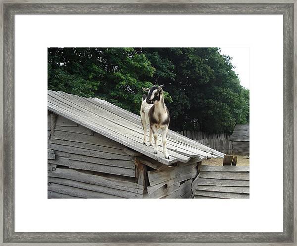 Goat On The Roof Framed Print