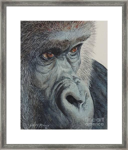 Going Ape...sold  Framed Print