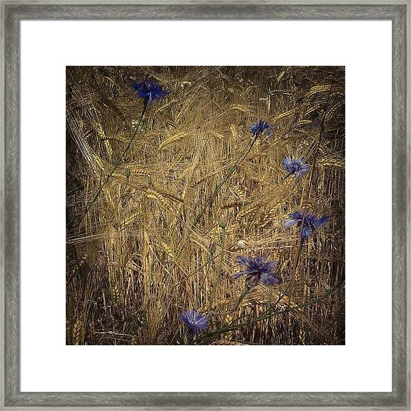 Gold And Blue Framed Print