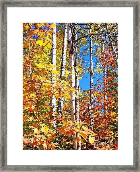 Gold Autumn Framed Print