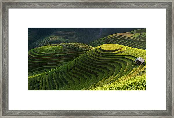 Gold Rice Terrace In Mu Cang Chai,vietnam. Framed Print