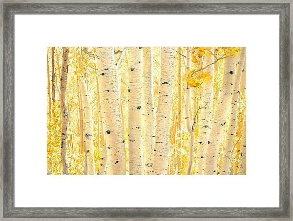 Golden Aspens Utah Framed Print