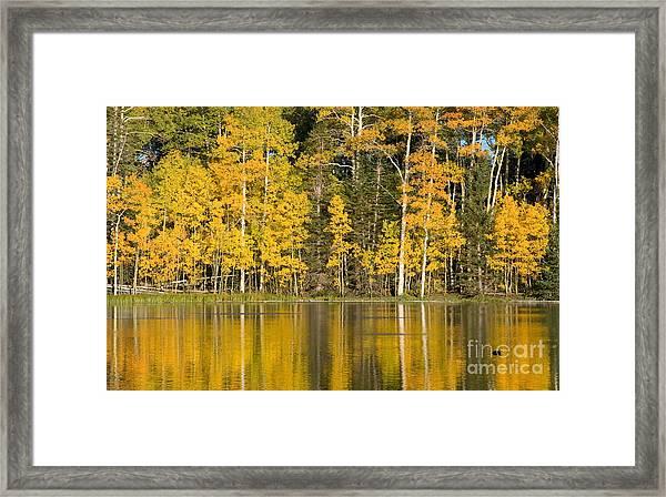 Golden Autumn Pond Framed Print