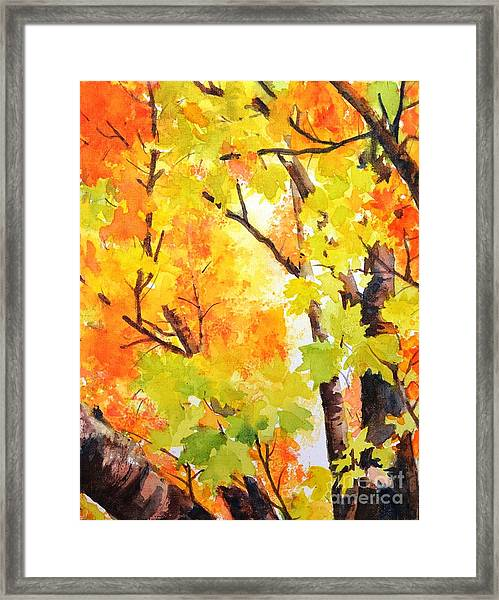 Golden Canopy 2 Framed Print