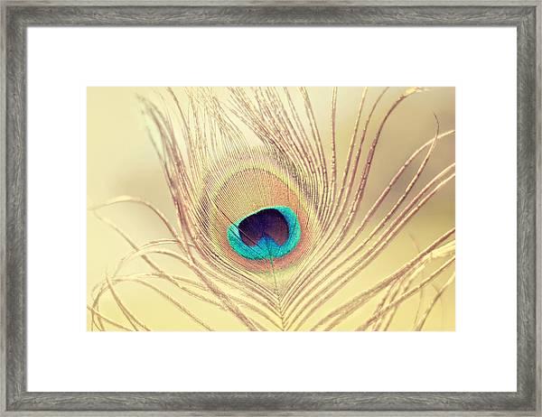 Golden Feather Framed Print