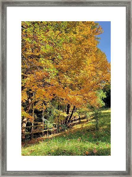 Golden Fenceline Framed Print
