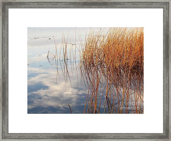 Golden Grasses Framed Print by Lili Feinstein