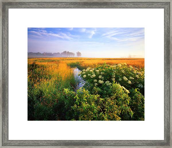 Golden Grassy Glow Framed Print