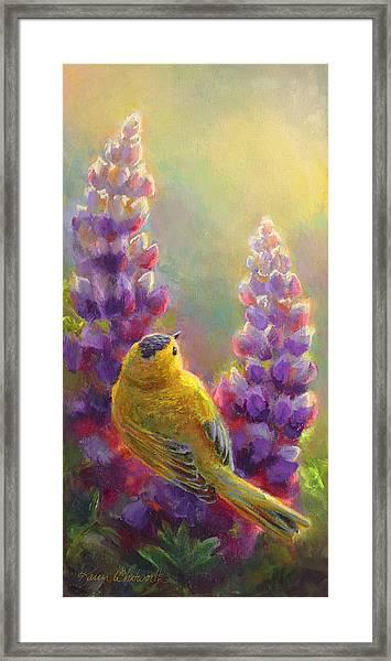 Golden Light 1 Wilsons Warbler And Lupine Framed Print