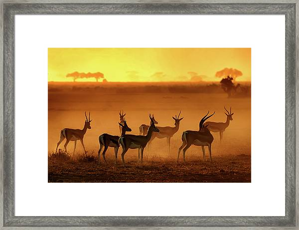 Golden Light Framed Print by Mathilde Guillemot
