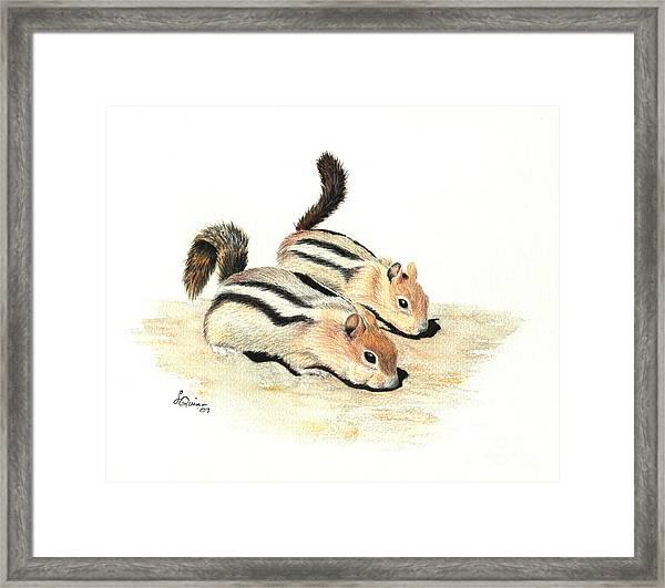 Golden-mantled Ground Squirrels Framed Print