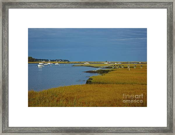 Golden Marsh Framed Print