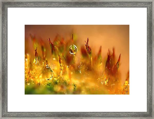 Golden Palette Framed Print
