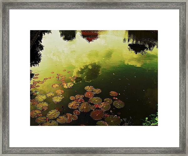 Framed Print featuring the photograph Golden Pond by Yen