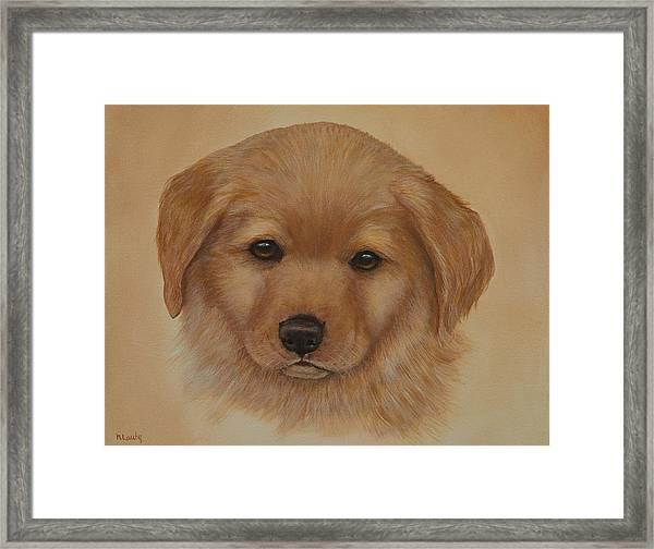 Golden Puppy Framed Print