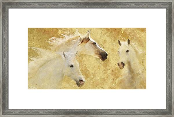 Golden Steeds Framed Print