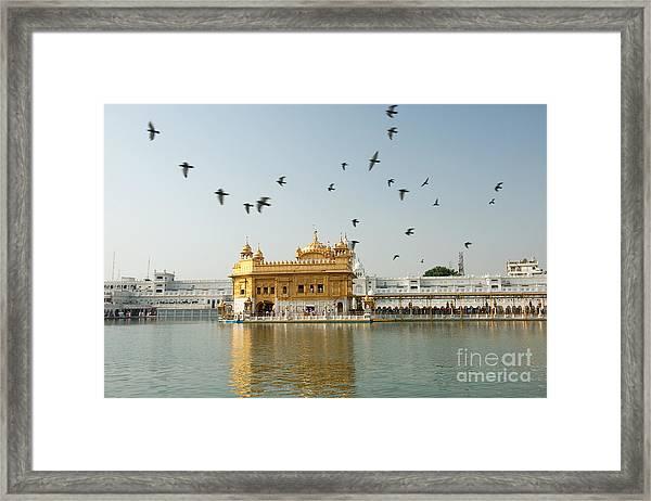 Golden Temple In Amritsar Framed Print