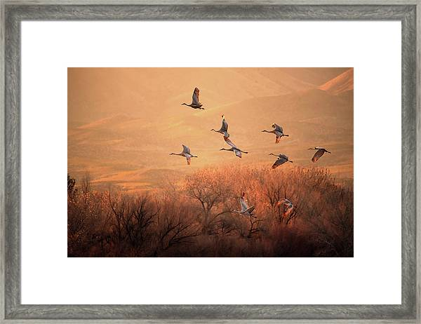 Golden Time Framed Print by Hao Jiang