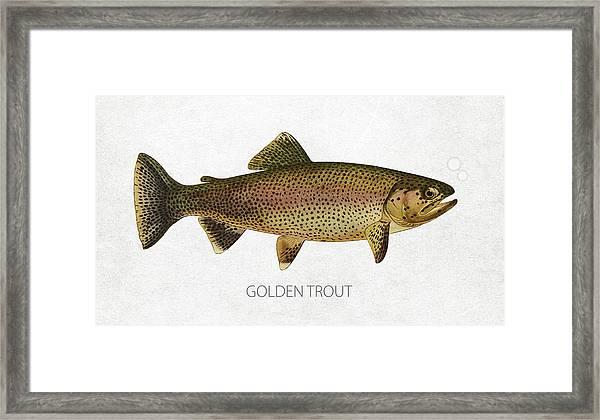 Golden Trout Framed Print