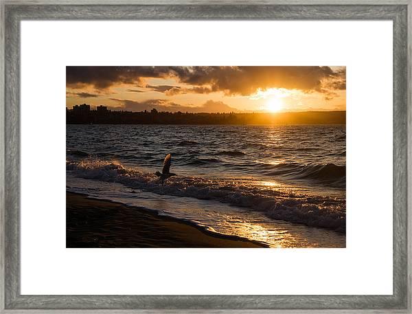 Golden Wings Golden Water Framed Print