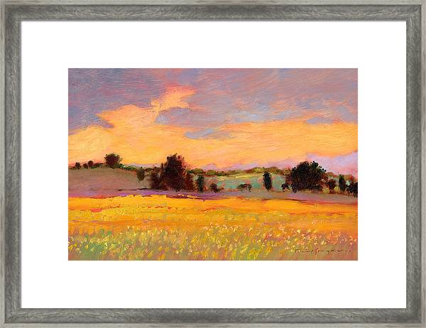 Good As Gold  Framed Print