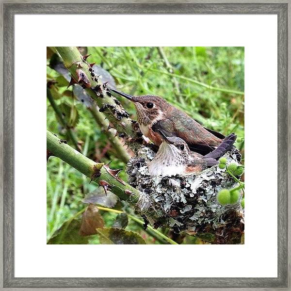 Good Morning Little Ones. Is Today The Framed Print