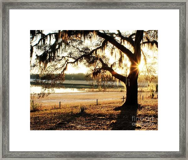 Good Morning Mossy Oak Framed Print