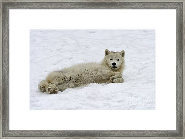 Good Wolfie ... Framed Print